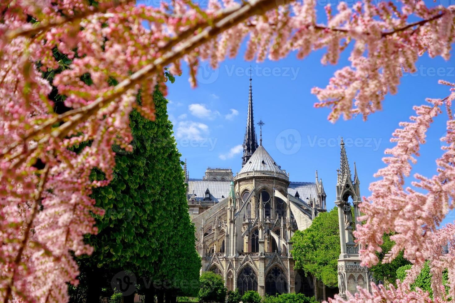 Notre Dame  during spring time in Paris, France photo