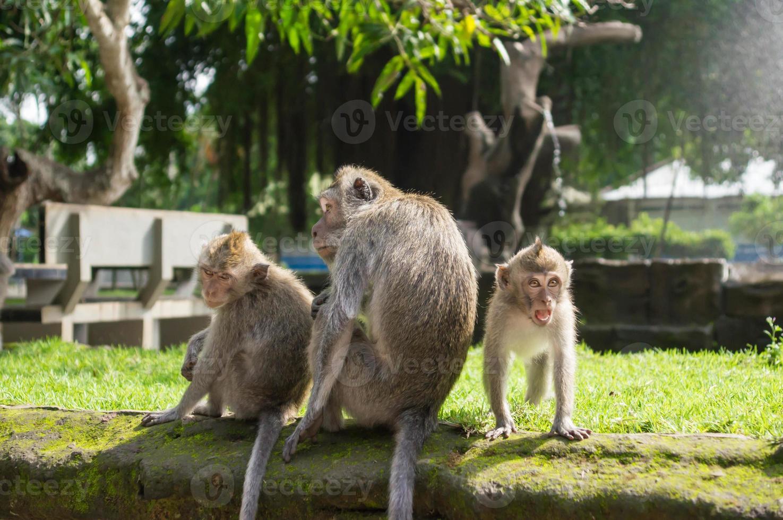 familia de monos en el parque forestal foto