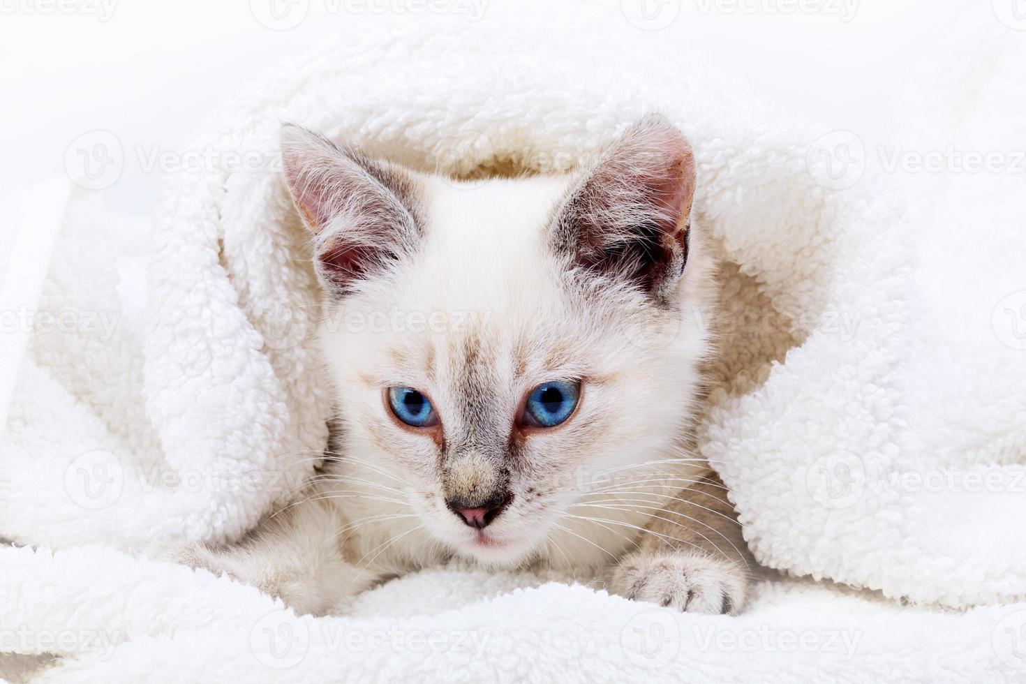 Kitten portrait photo