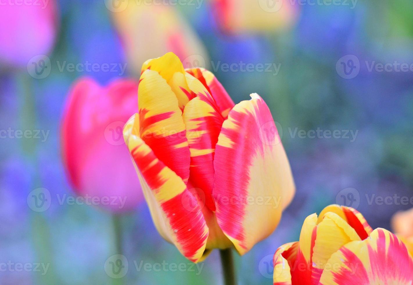 hermoso retrato de flores foto