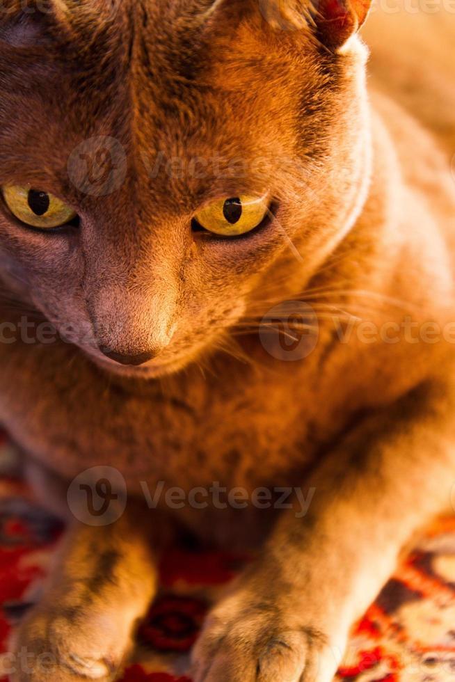 Cat's portrait photo