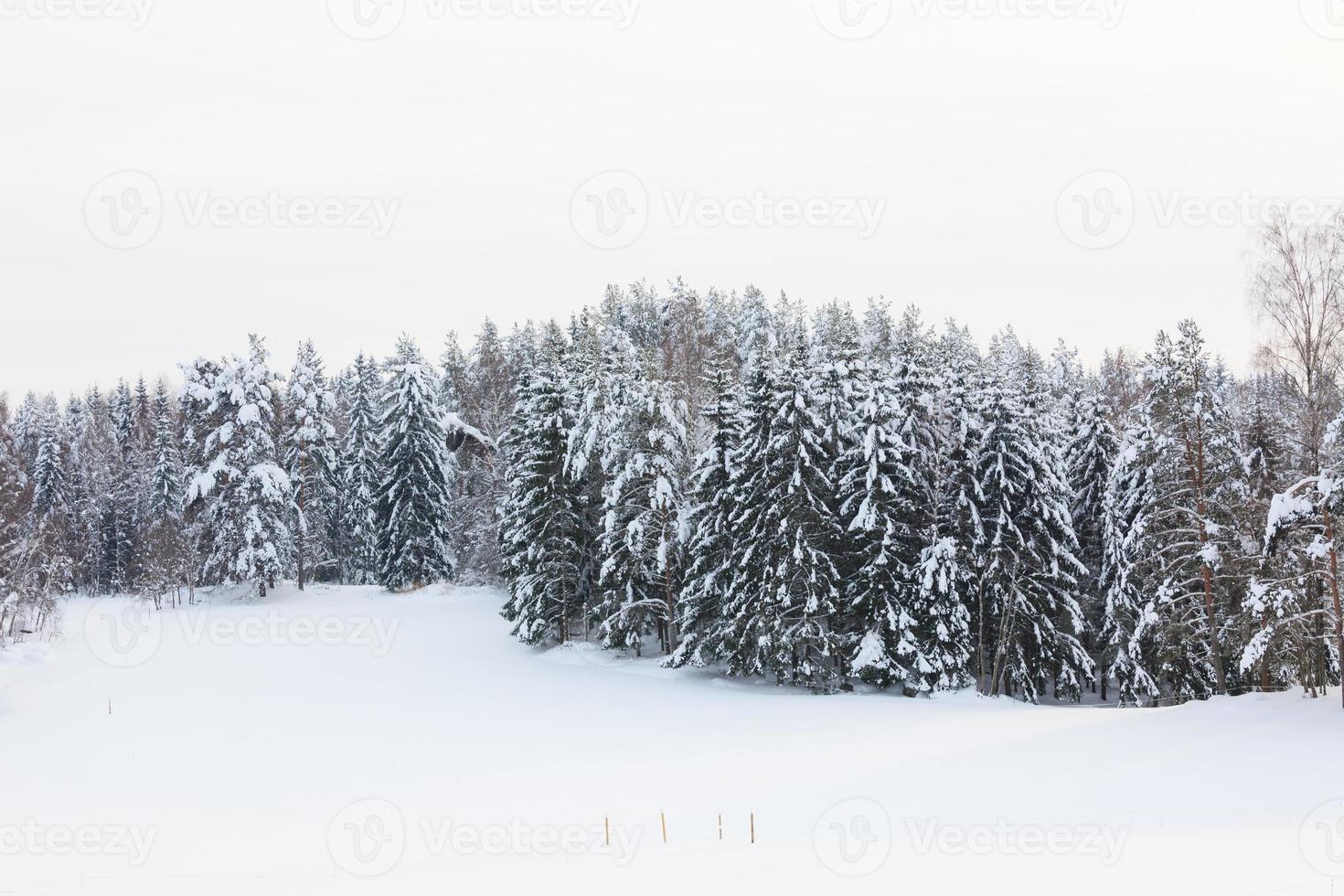 bosque cubierto de nieve y campo foto