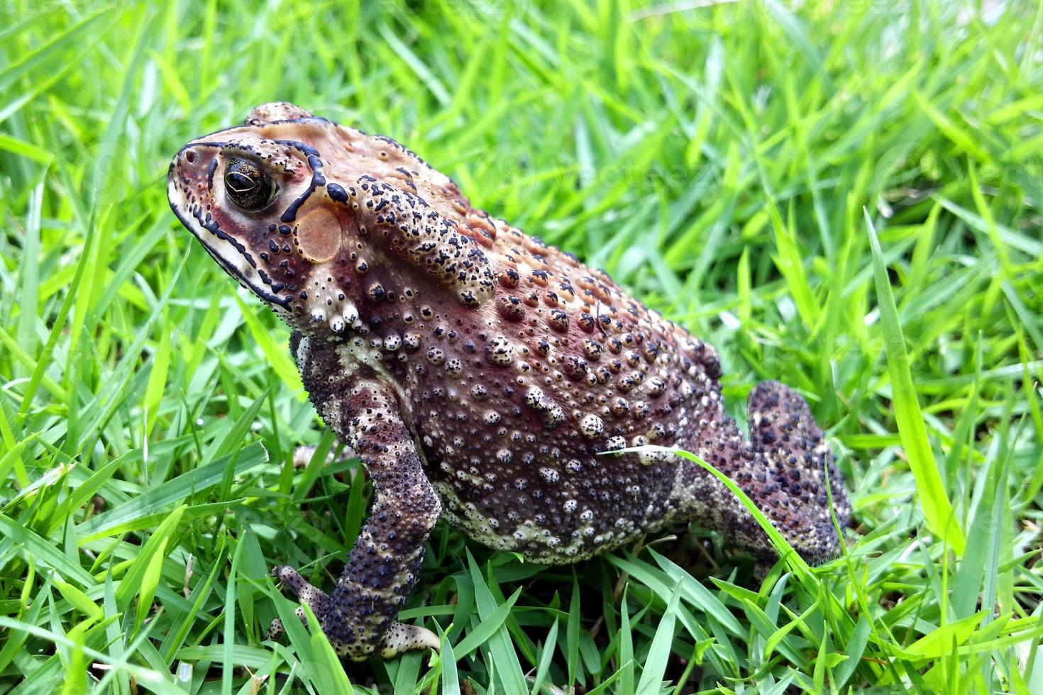 Toad close up photo