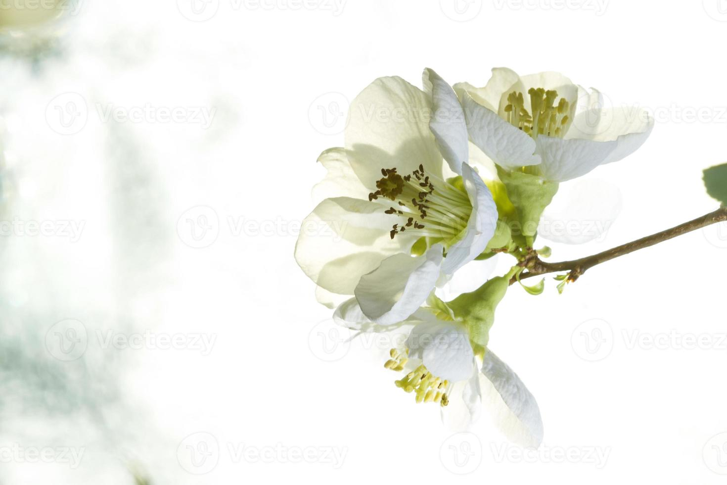 Primer plano de flores. foto