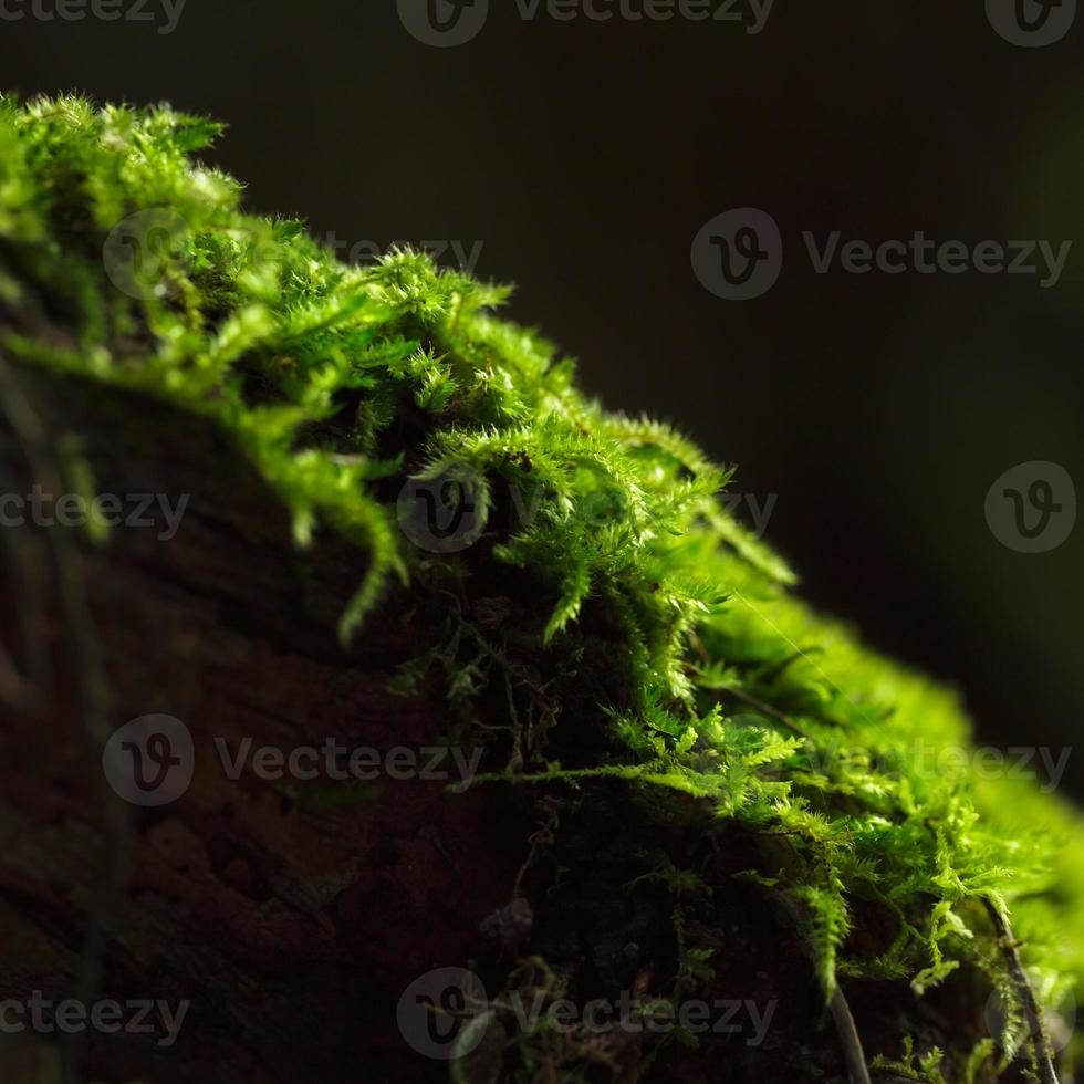 Close up moss. photo