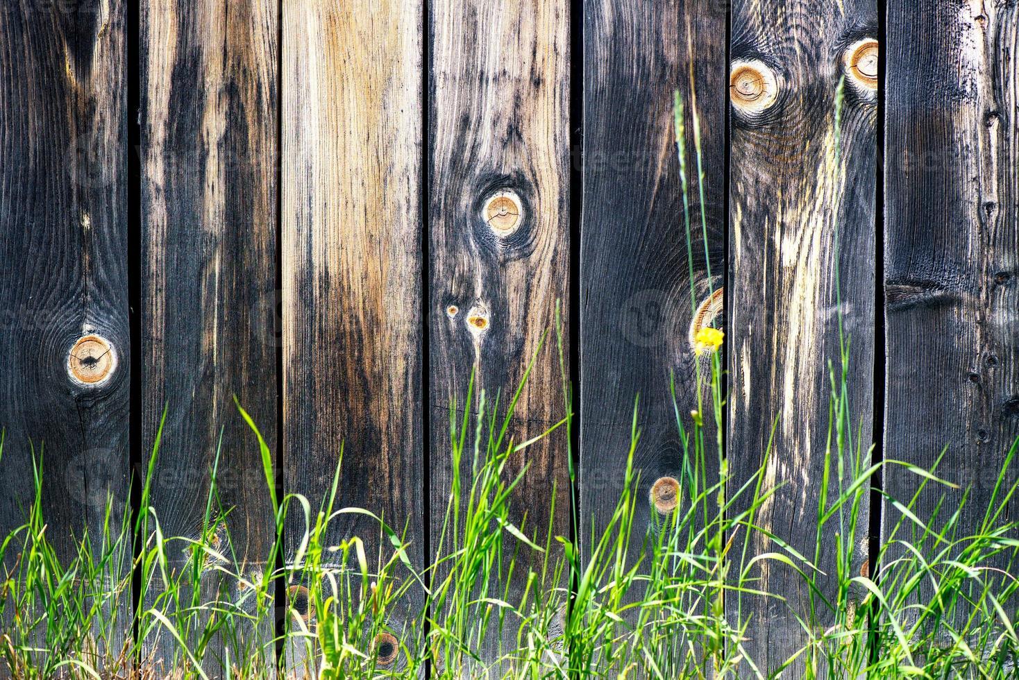hierba salvaje cerca de la valla de madera vieja foto