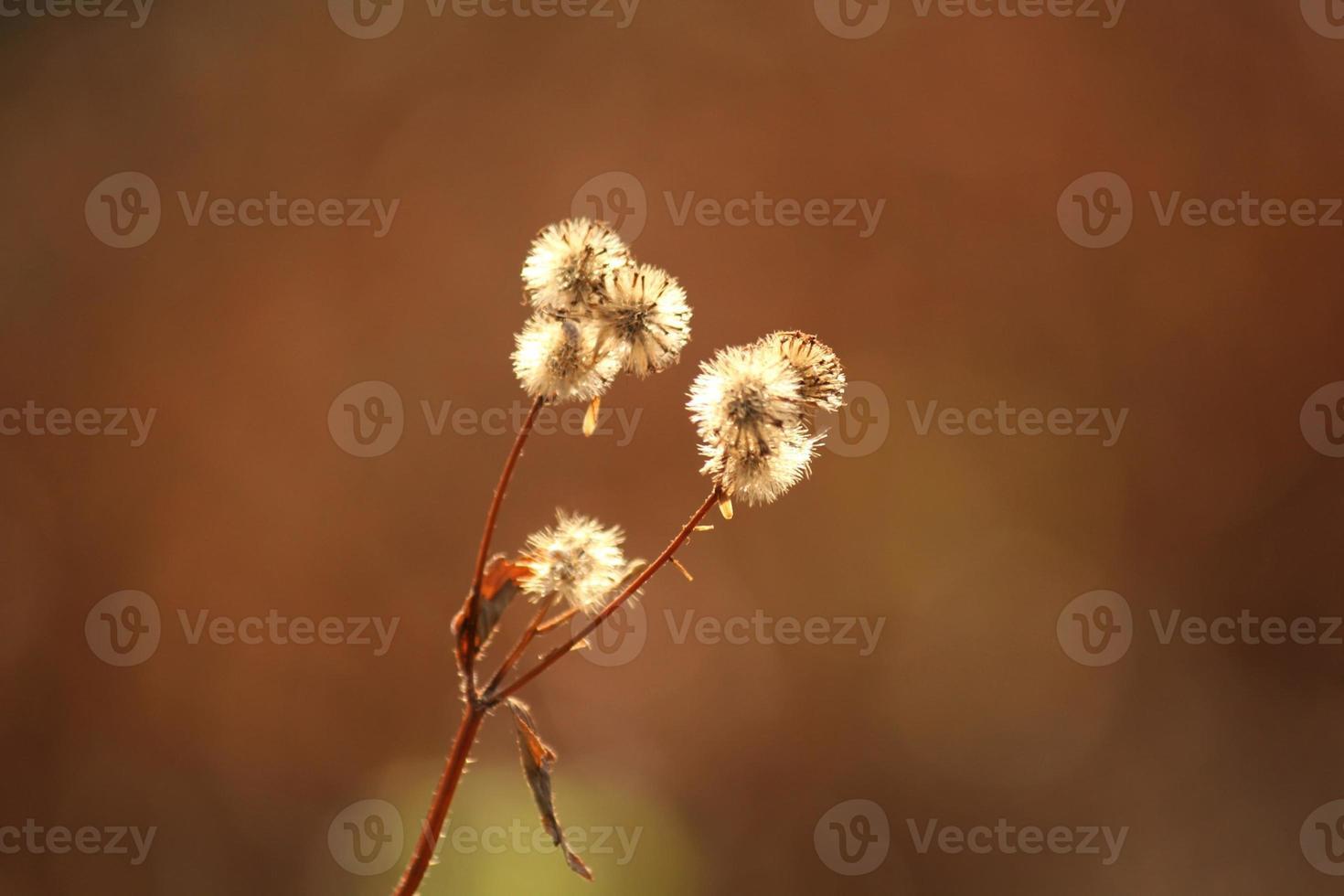 Grass close-up photo