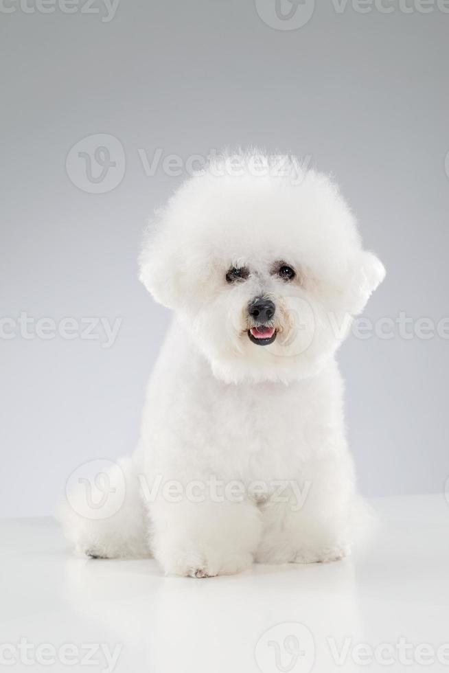 perro - papas fritas foto