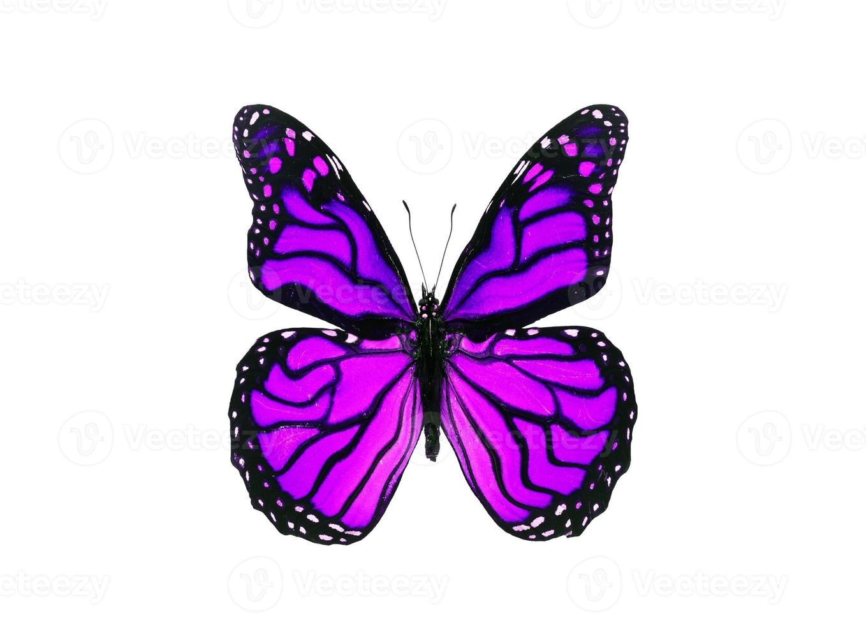 Mariposa violeta brillante aislado sobre fondo blanco. foto