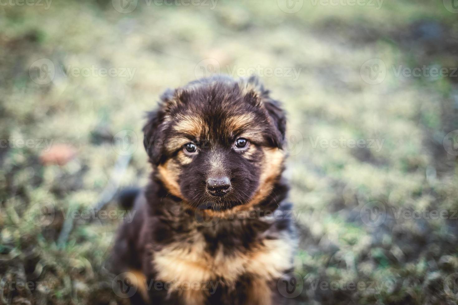 perro joven foto