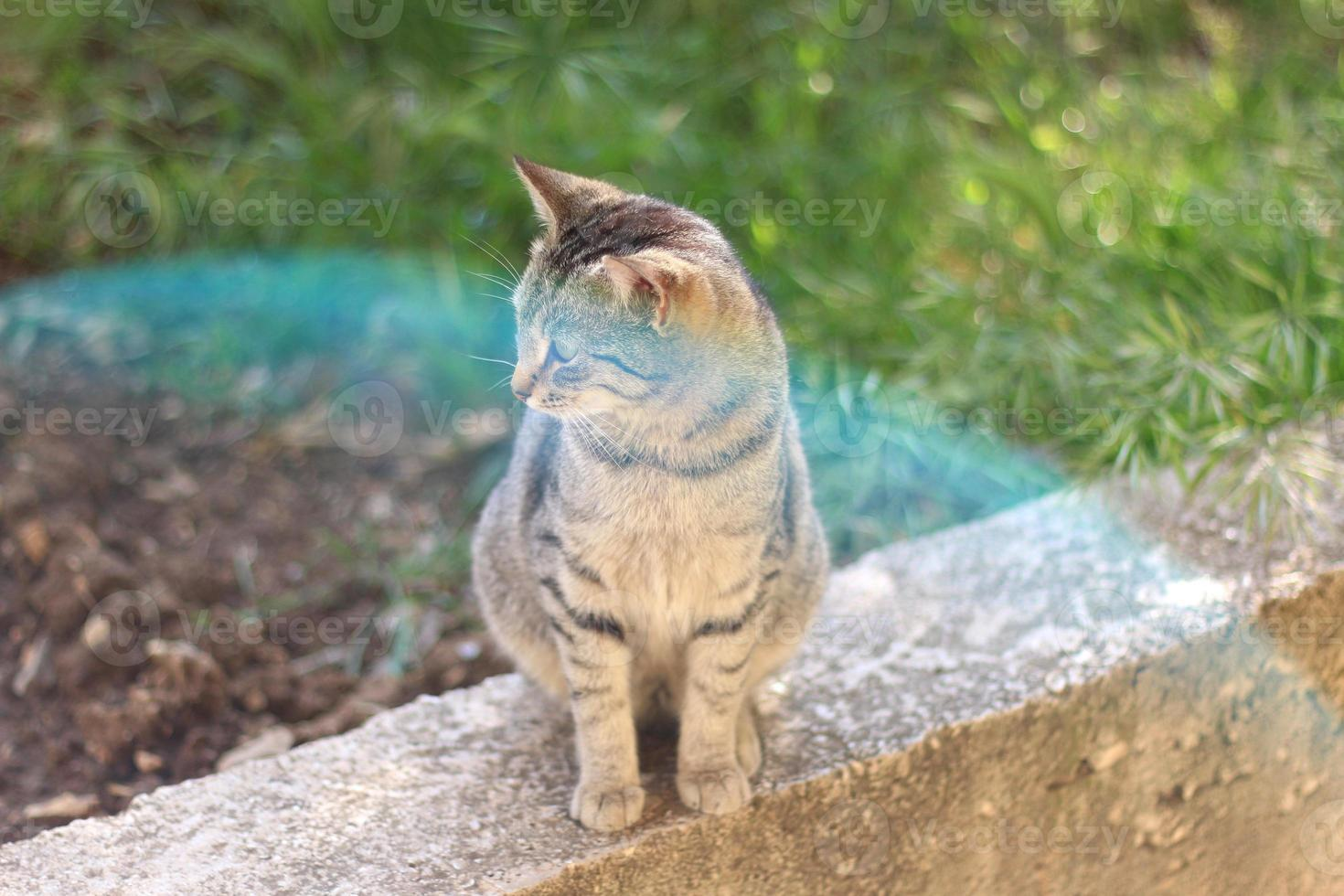 gato con destello de lente foto