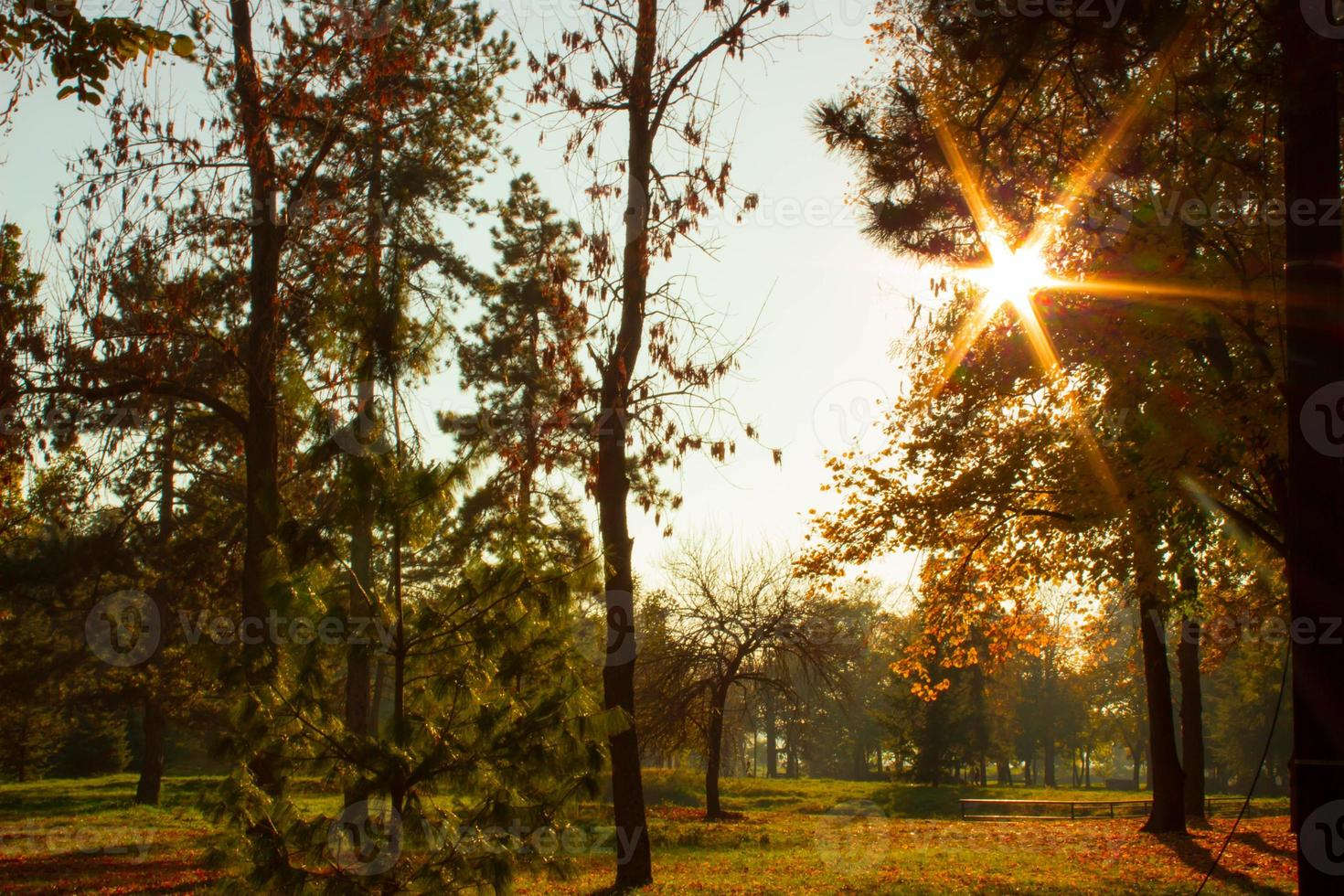 Sunflare behind the treetop in the park photo