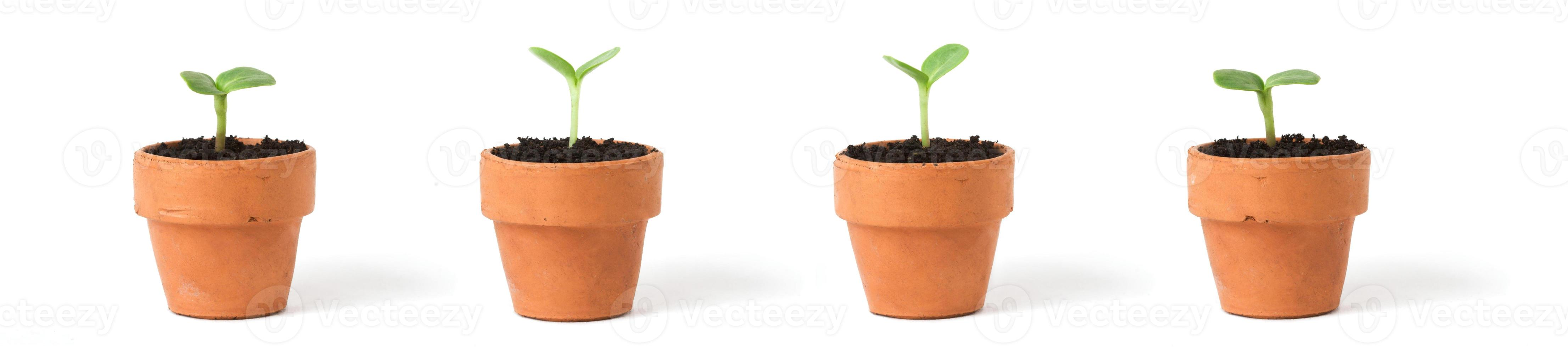 Pots on White photo