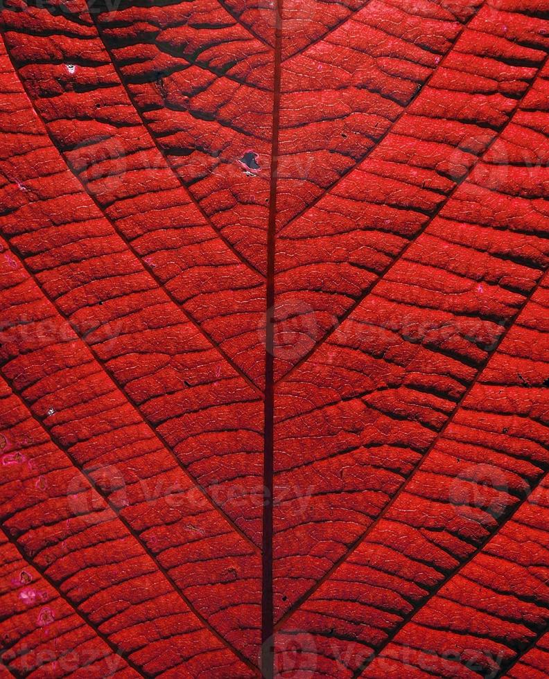 leaf texture , process with color effect photo