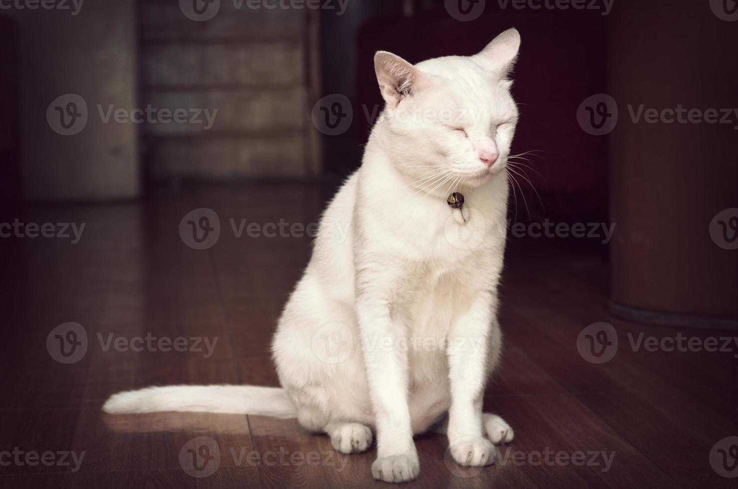 White cat asleep standing, process retro vintage style photo