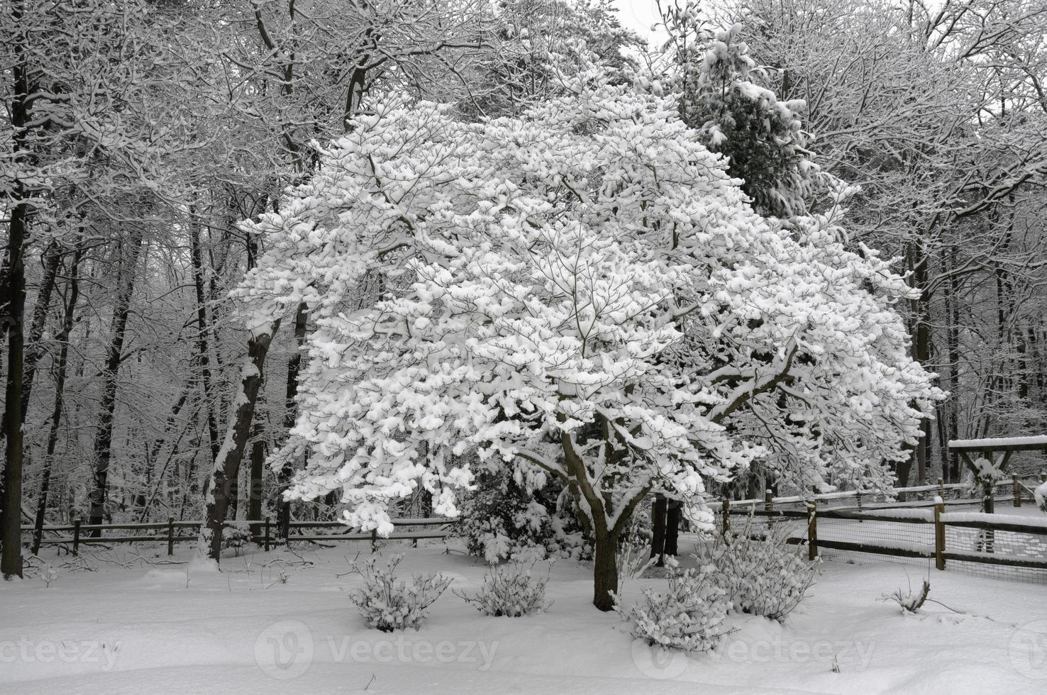 nieve en cornejo en las primeras etapas de la tormenta de nieve de 2010 foto
