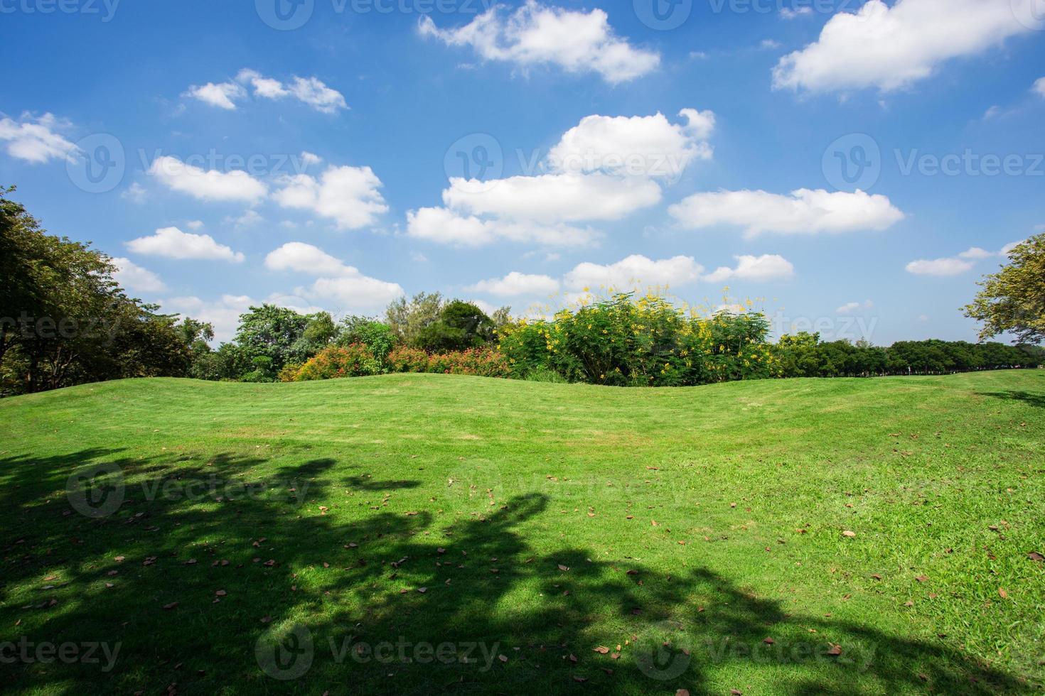 hermoso parque verde foto