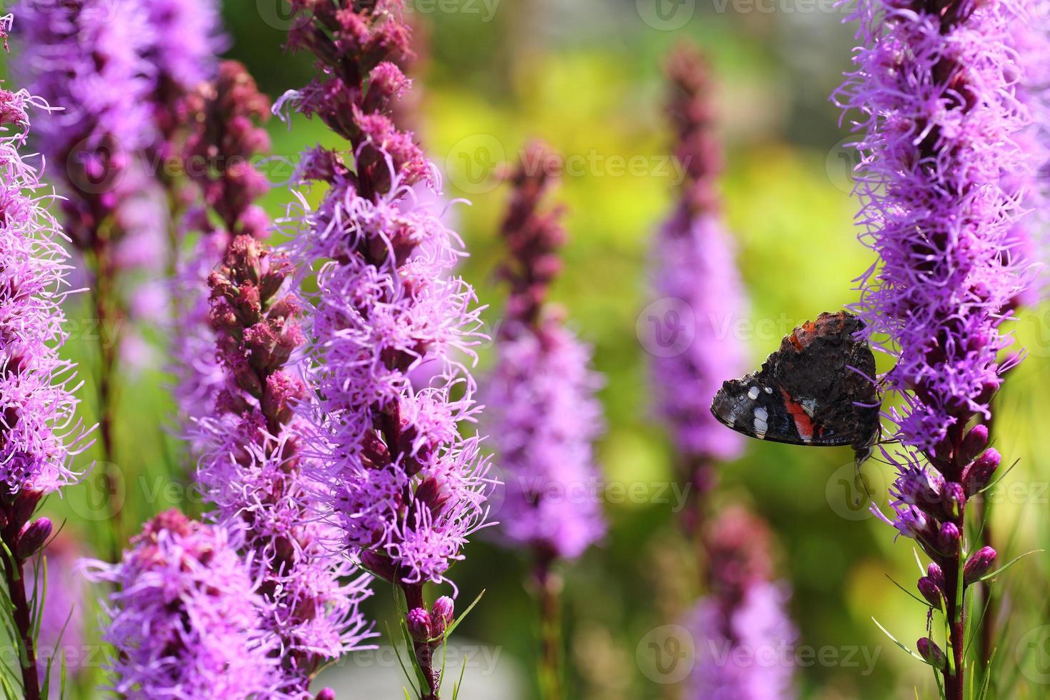 Flores moradas foto
