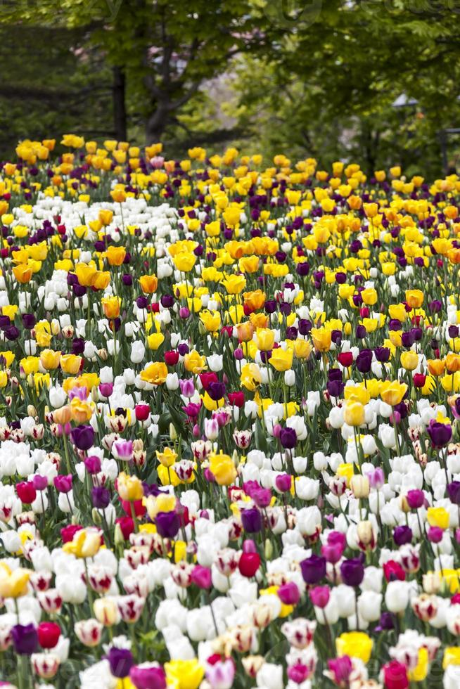 jardín de flores foto