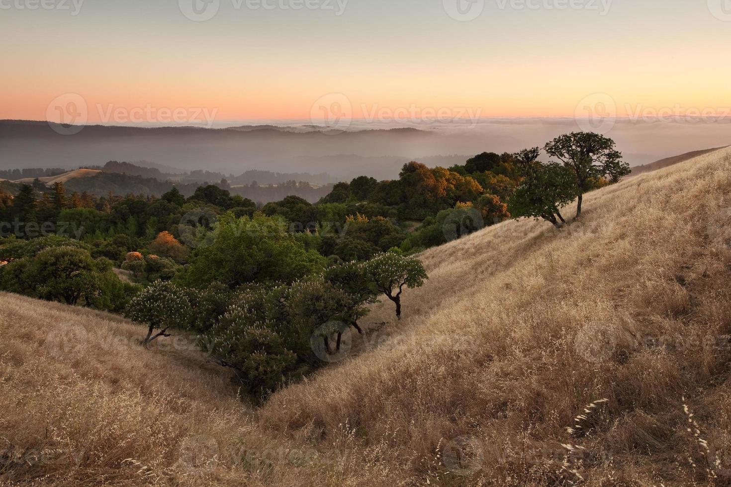 valle y árboles al atardecer foto