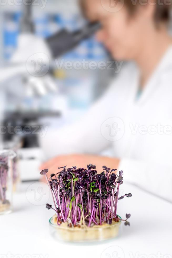 Quality control. Senior scientist or tech tests cress sprouts photo