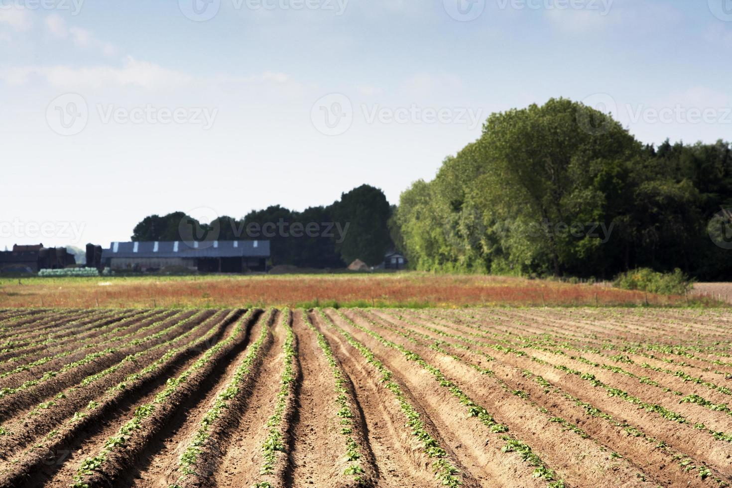 Planted field photo