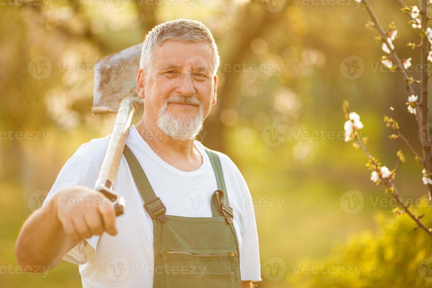 jardinero senior en su jardín foto