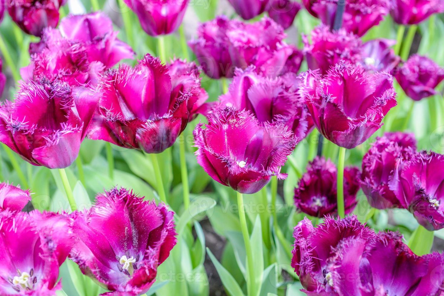 Amsterdam flowers photo