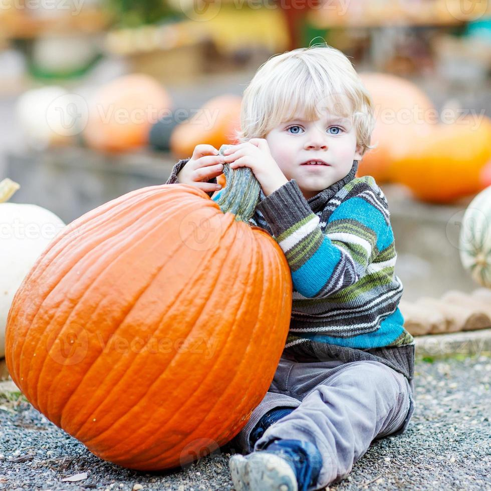 Little kid sitting with lots of pumpkins on patch farm photo