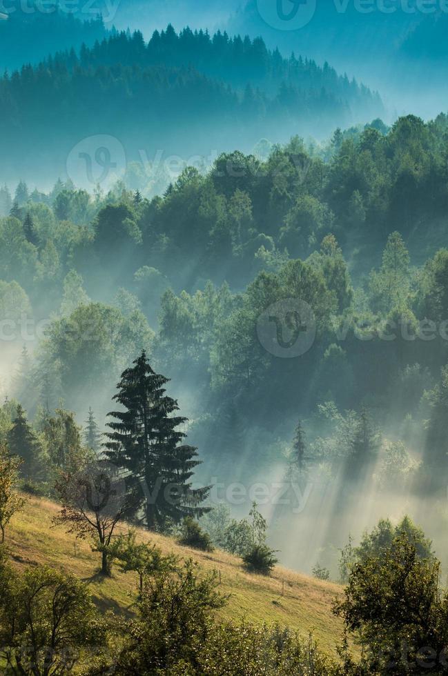 Foggy dawn photo