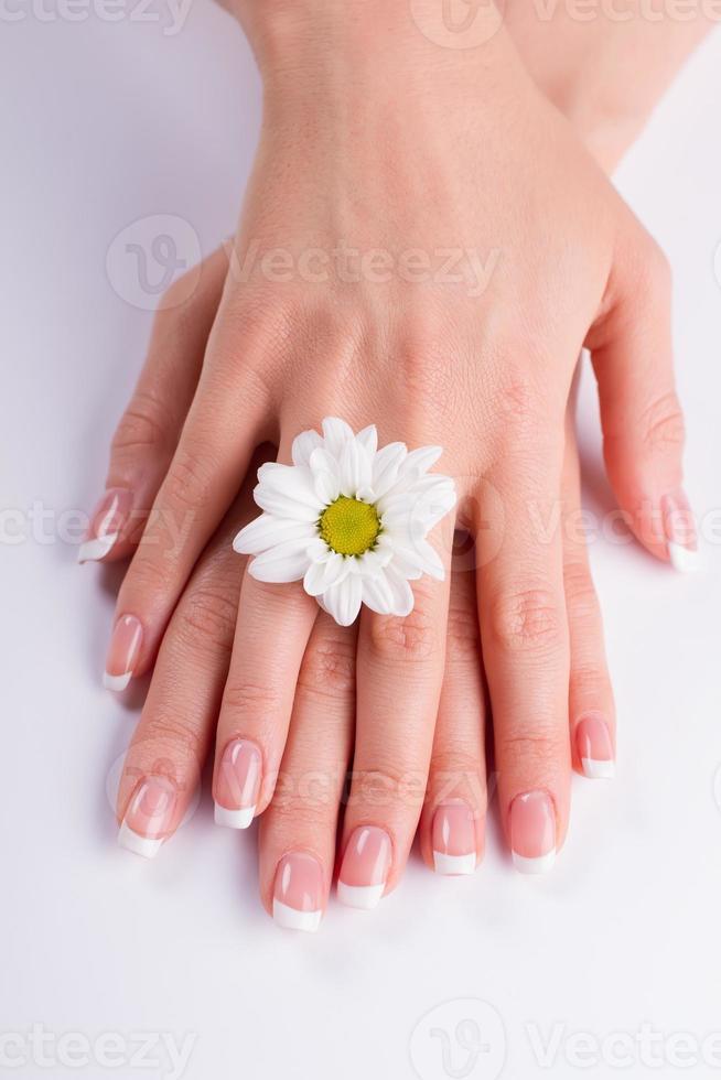 manicura francesa con margarita blanca. foto