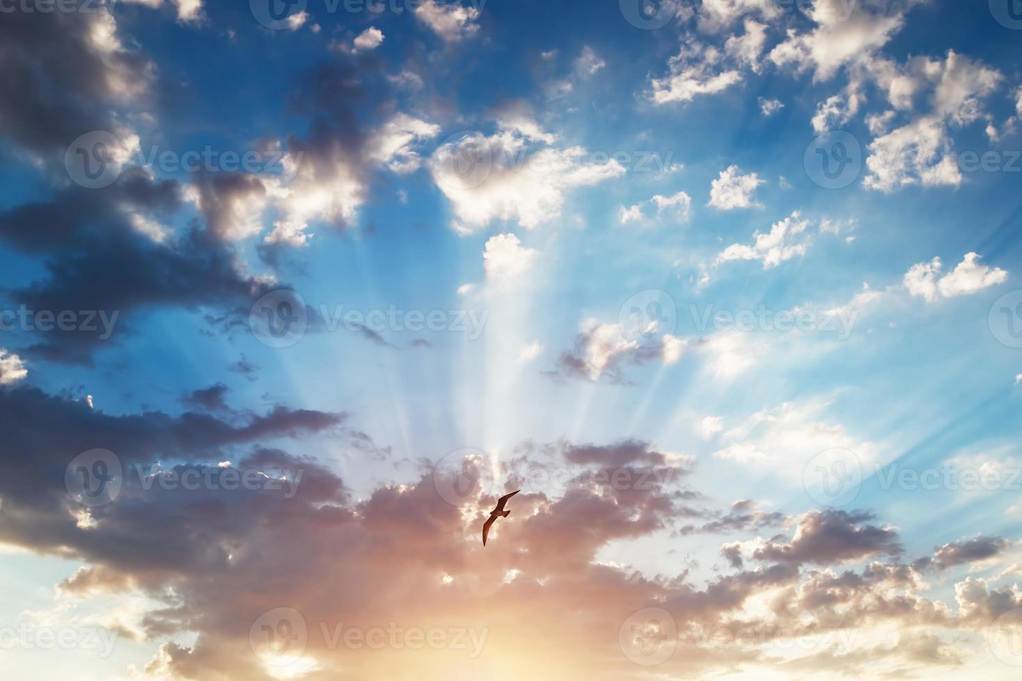 hermoso cloudscape y ave voladora, tiro al amanecer foto