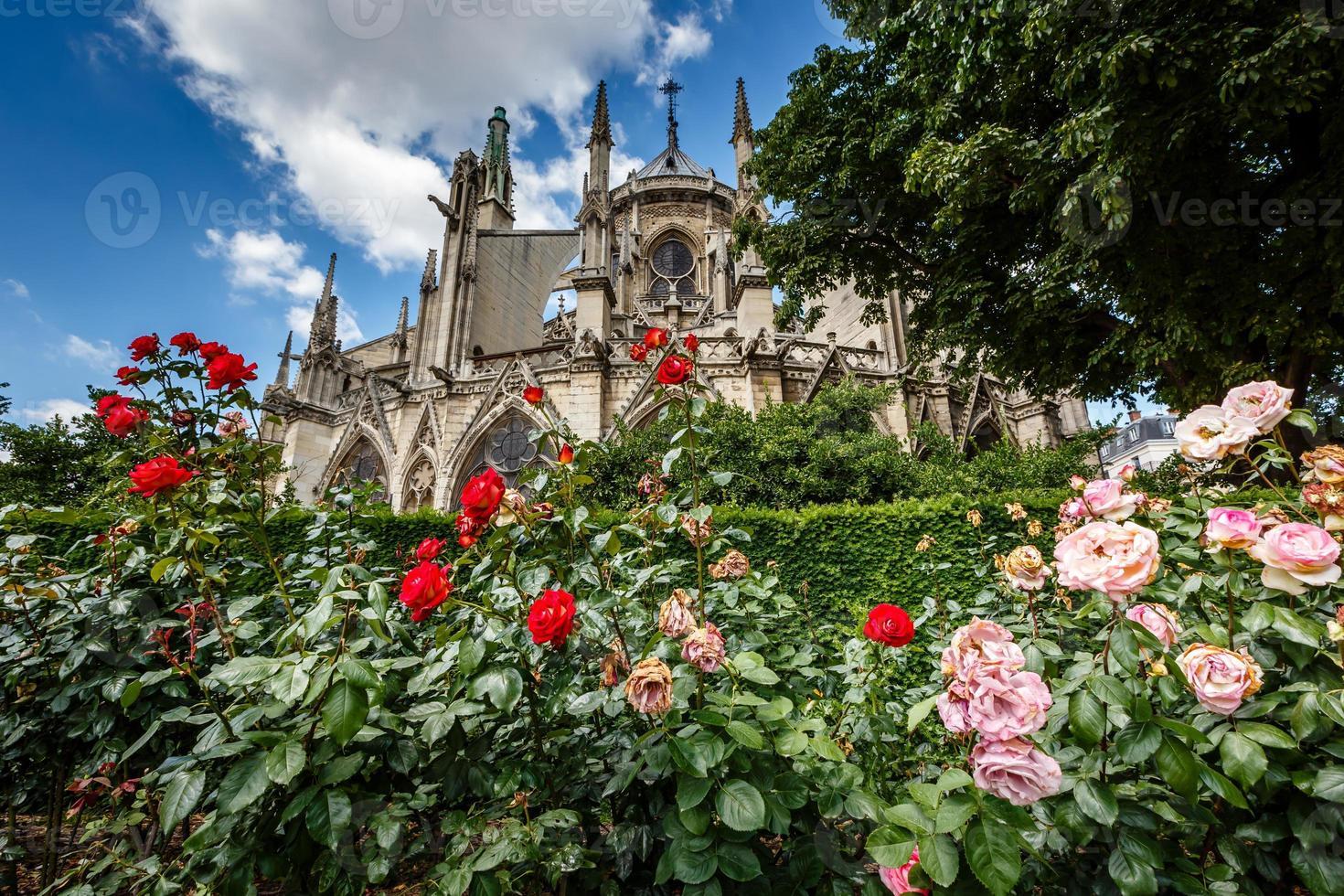 Catedral de Notre Dame de París con rosas rojas y blancas foto