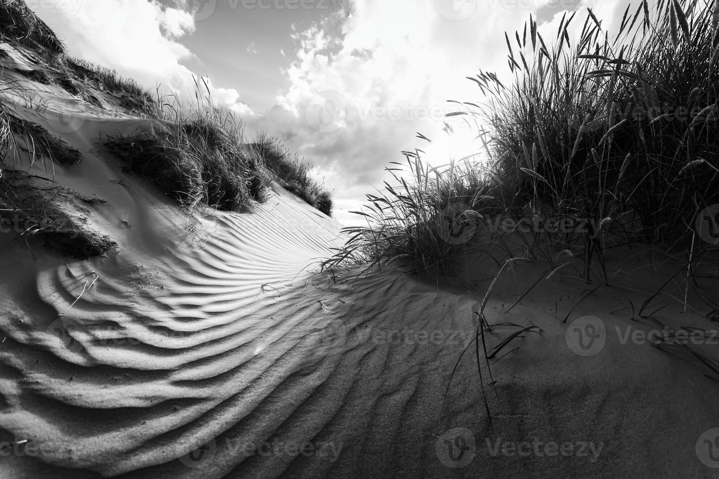 dia en las dunas foto