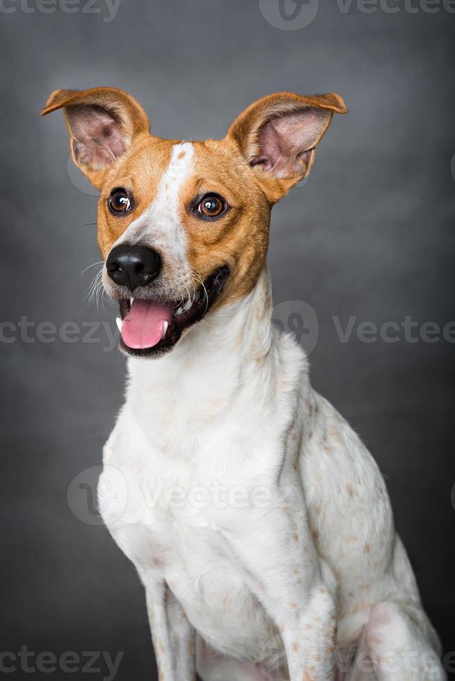 retrato de perro foto