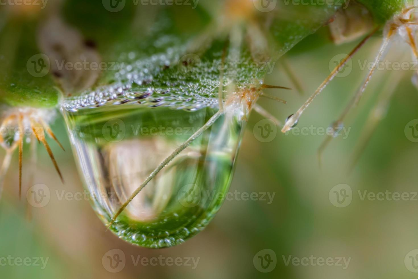 Cactus and water photo