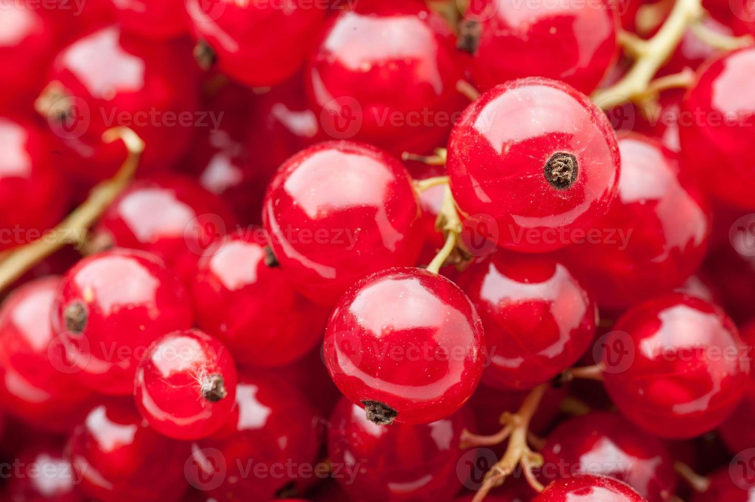 red currant background photo