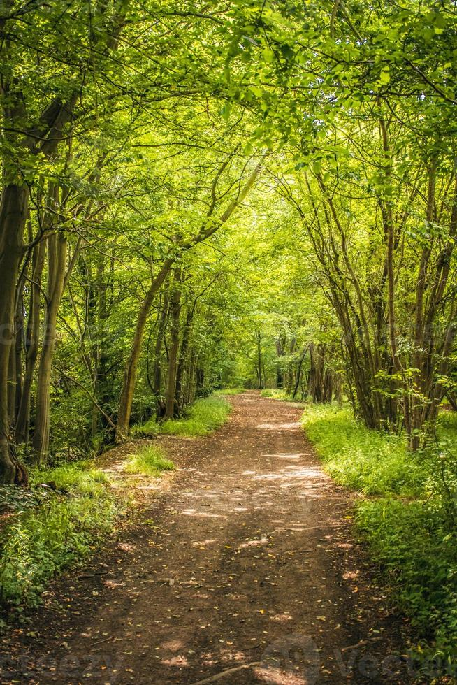 footh path through forest photo