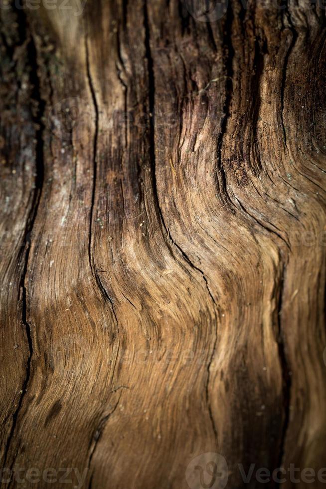 Fondo de madera. foto