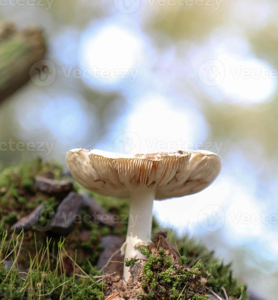 cogumelo foto