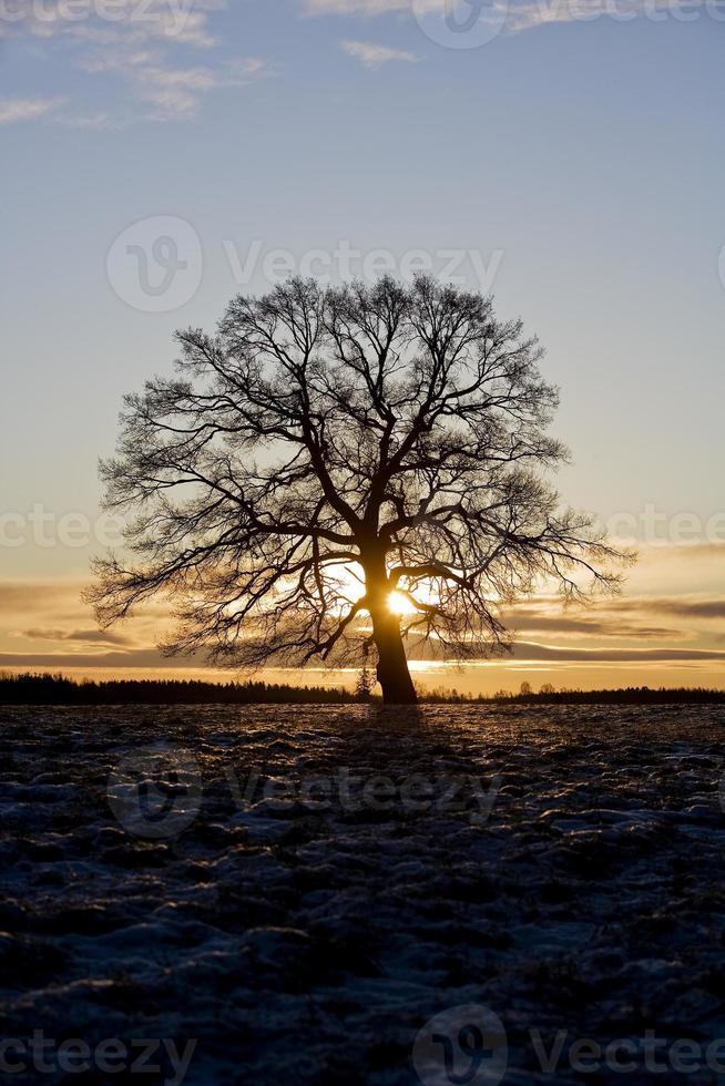 Tree in backlight photo