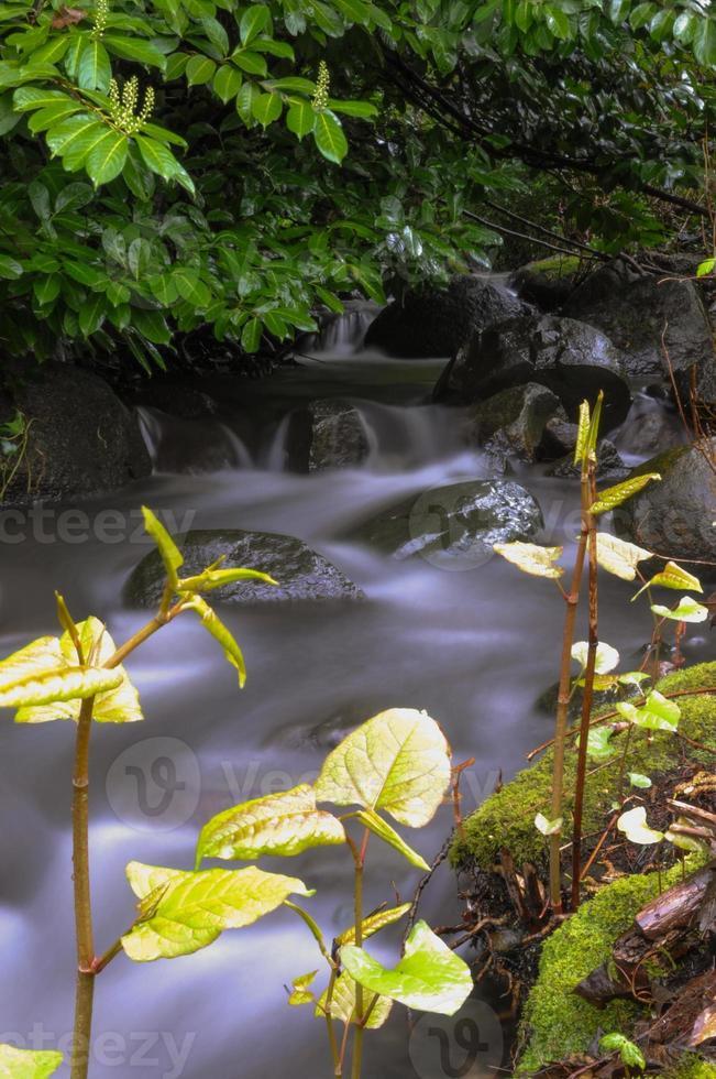 hojas de primavera y corriente foto
