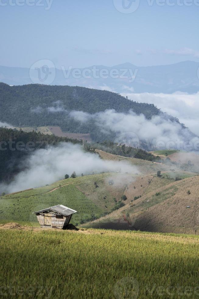 Foggy Rice Paddy photo