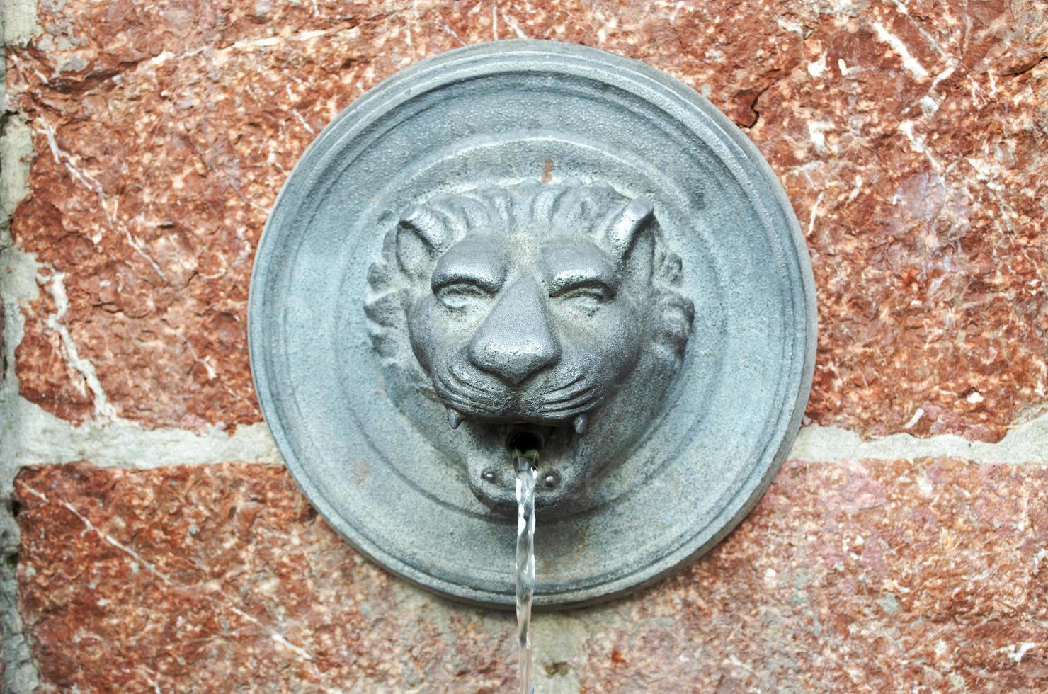 bebedero, león foto