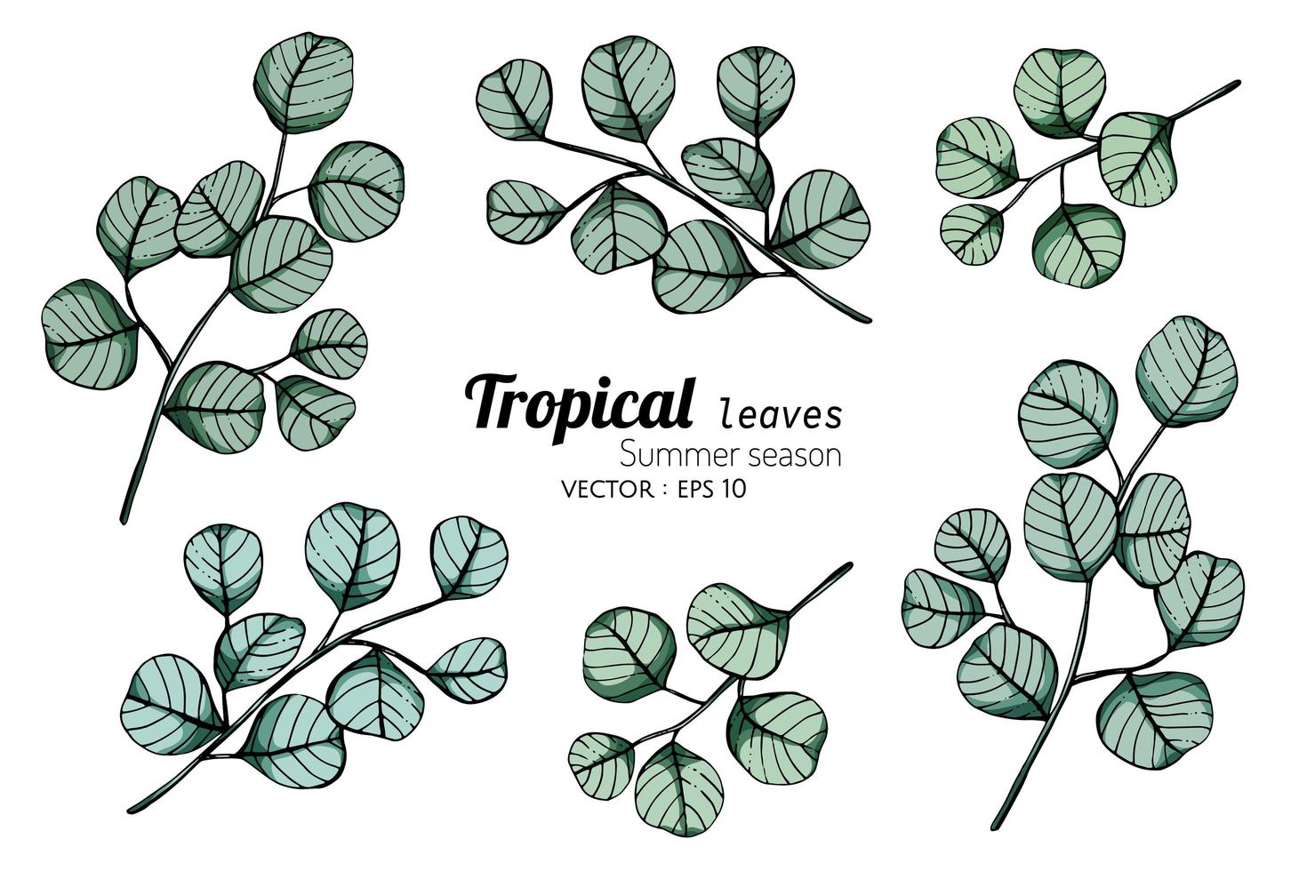 foglie disegnate a mano foglia tropicale vettore