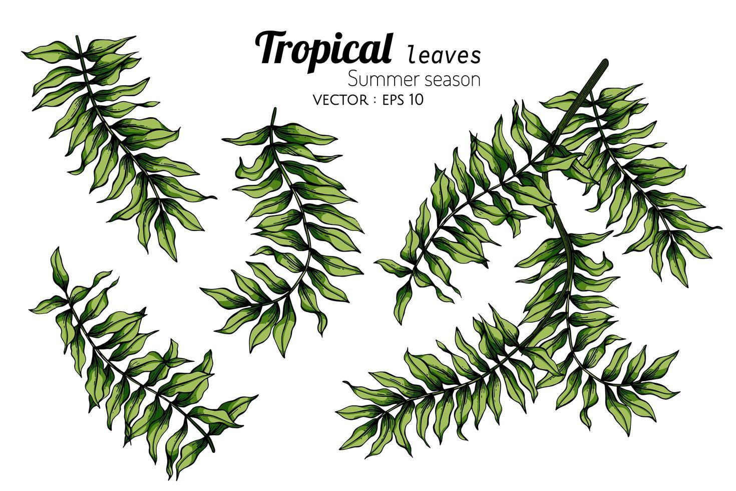 serie di disegni di foglie di felce vettore