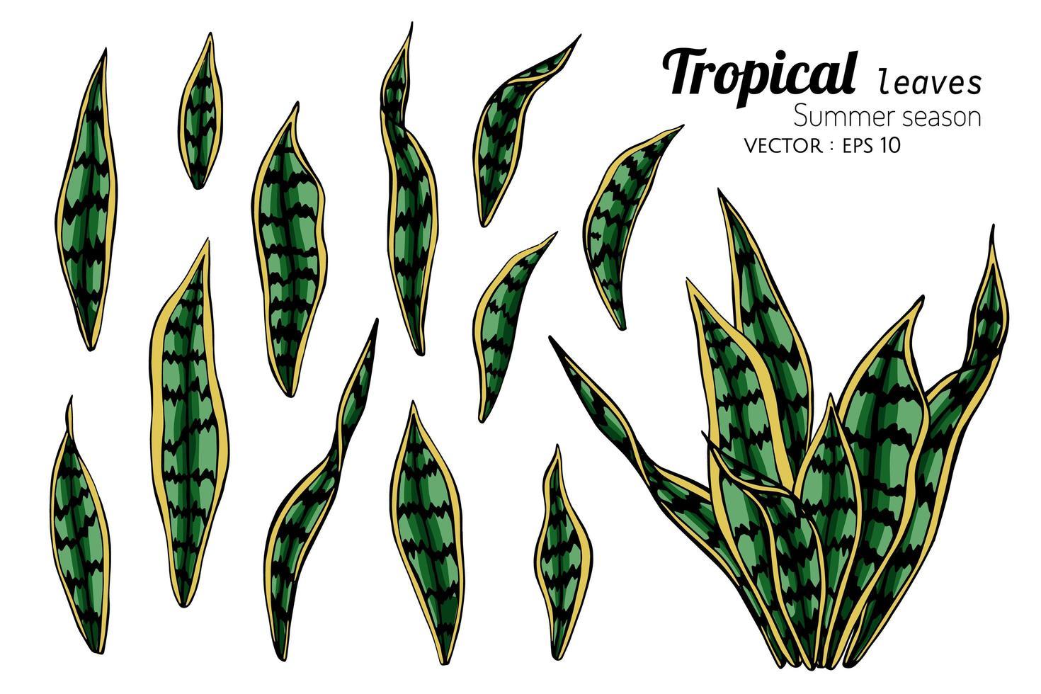 set di foglie selvatiche tropicali vettore