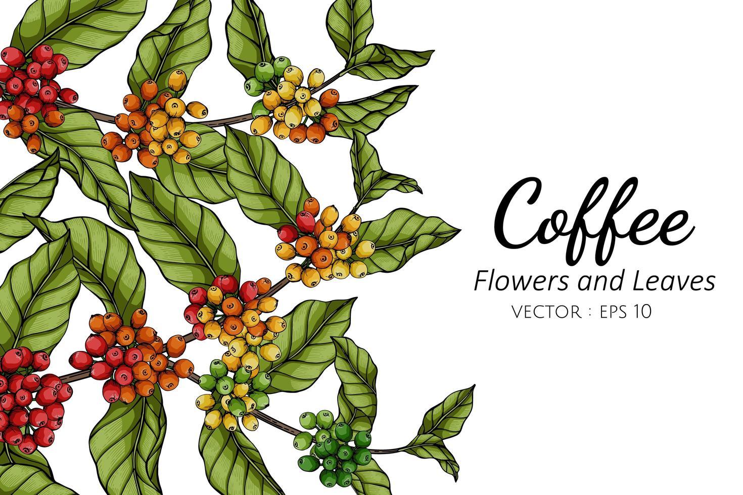 dibujo de flores y hojas de café vector