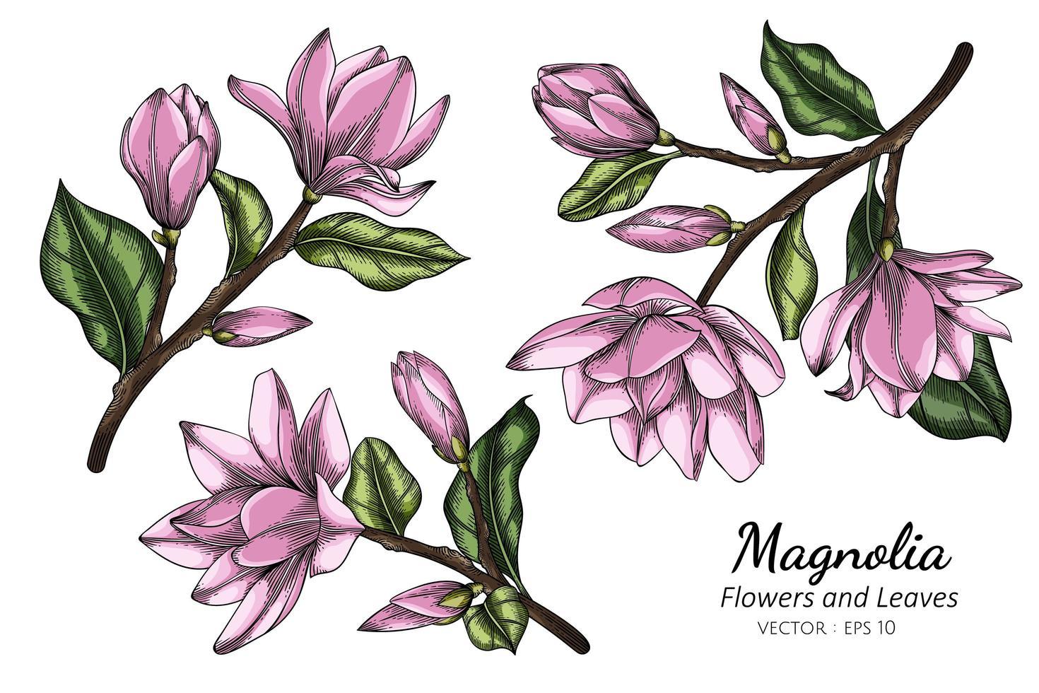 desenho de flor e folha de magnólia rosa vetor