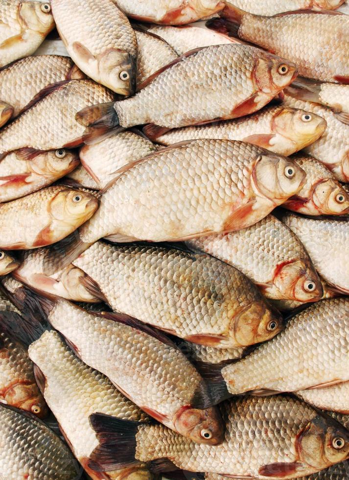 fish carp photo